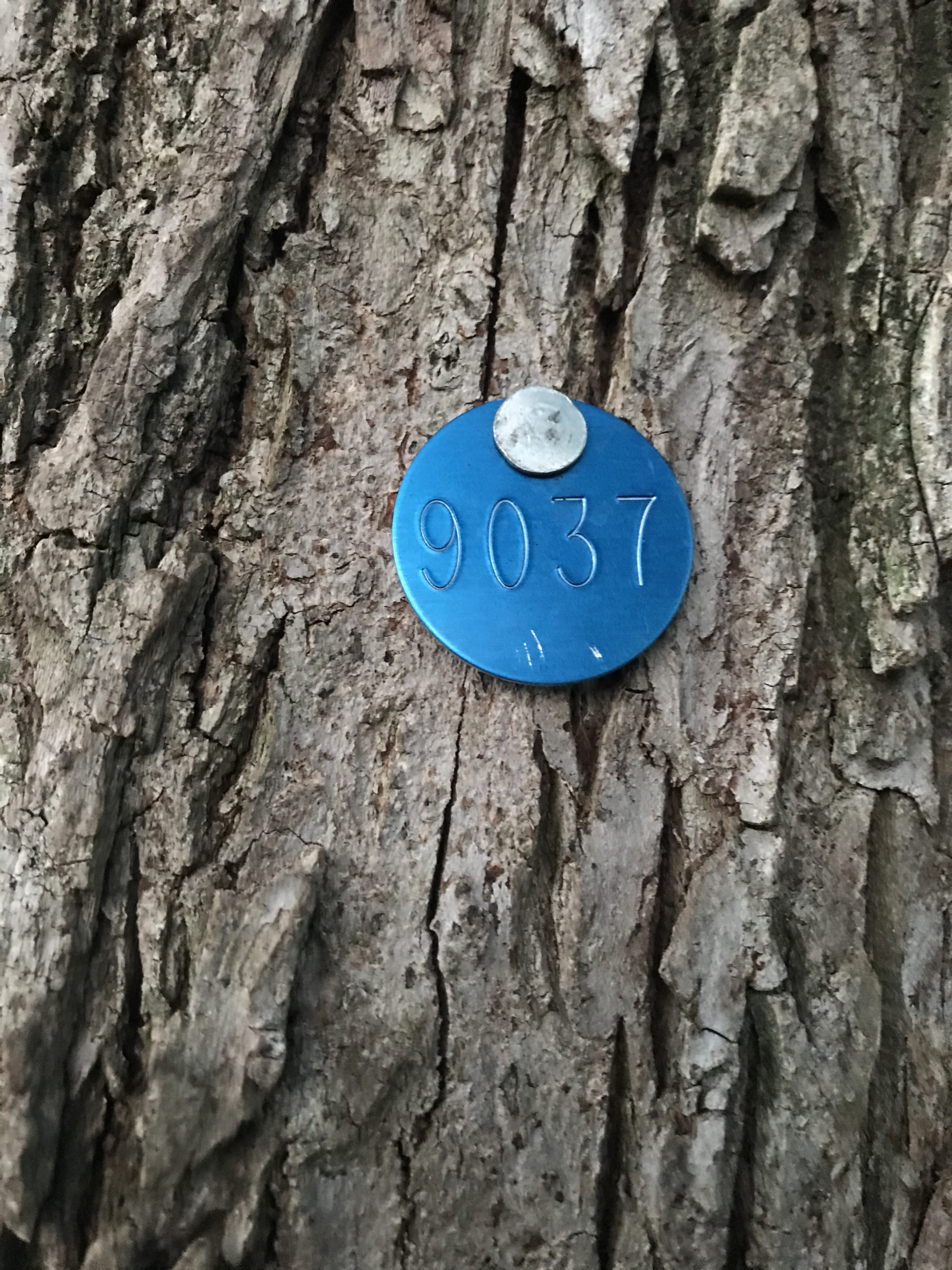 blue metal tag number 9037 on tree trunk